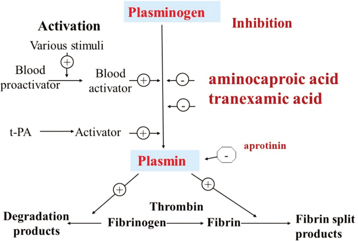 Figure 2 Mechanism of action of Tranexamic acid in clotting system