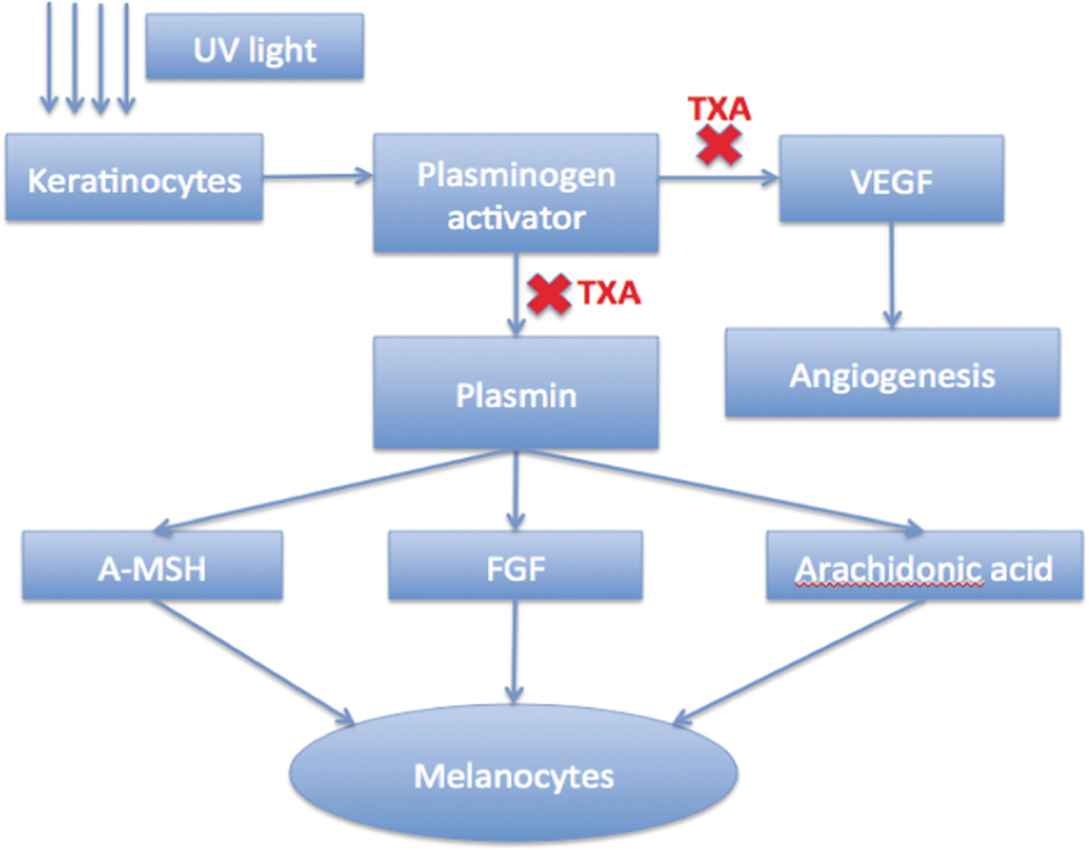 Figure 3 Mechanism of action of Tranexamic Acid in melasma